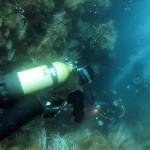 plongeurs11b